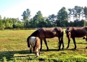 drawing nite   plein air event @ M.C. Churchill Nash Horse Acreage    Rock Hill   South Carolina   United States